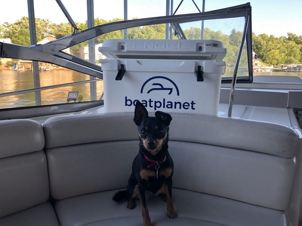 boating with dogs boat planet